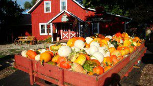 Pumpkin Picking Blog