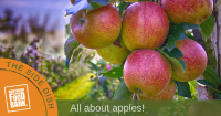 All about apples_blog header